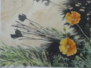 Water color painting of yellow poppies by steve shonk