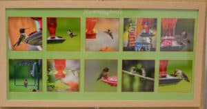10 photos of hummingbirds in grid and framed by michelle wittensoldner